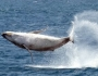 ffc_25-09-2012_egn_02_25whale-breach_t325