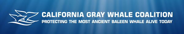 simple banner with california gray whale coalition logo super imposed on under water sun rays