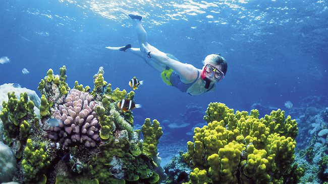 Image of diver underwater on the reef