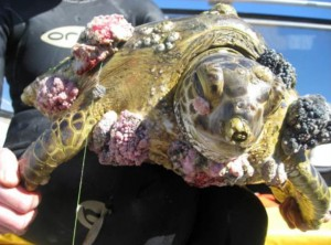 sick-turtle