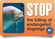 stop the slaughter of dugongs and turtles