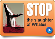 stop the slaughter of whales