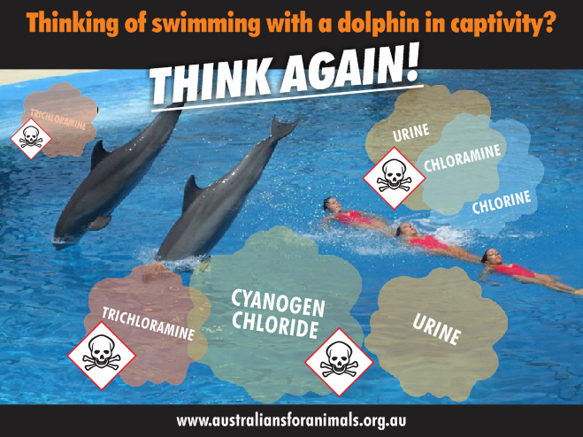 don't-swim-with-dolphins-in-captivity