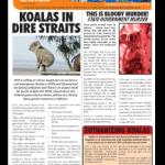 afa november 2016 newsletter cover