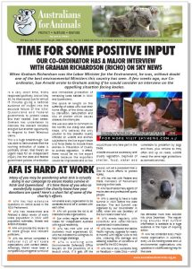 koala crisis newsletter cover
