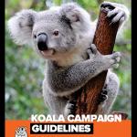 koala rescue guidelines