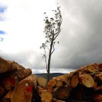 loggin in NSW