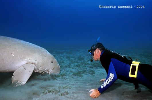 Dugong and Diver generously donated by Roberto Sozzani - http://www.robertosozzani.it/Dugong/photoEN.html
