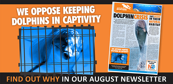 afa opposes keeping dolphins in captivity