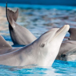 dolphin captivity