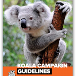 koala rescue guidelines