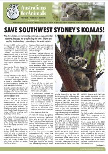australians for animals koala crisis newsletter