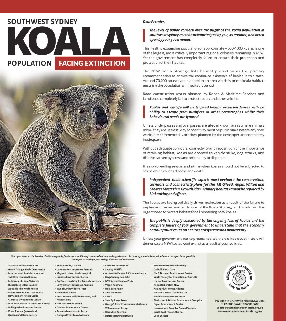 north shore times koala open letter