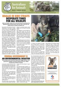 koala crisis feb 2020 newsletter